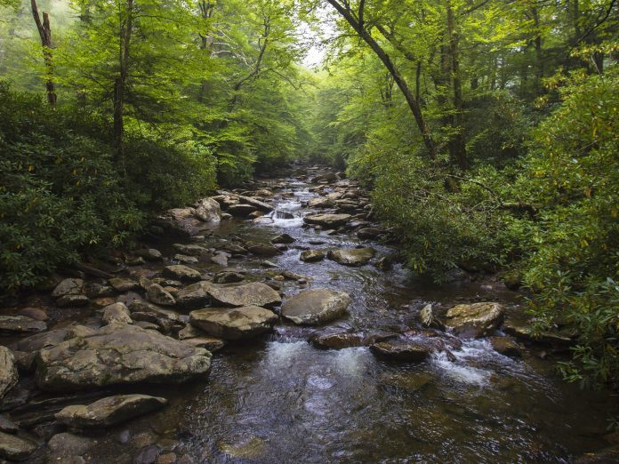 river in a Western NC state park