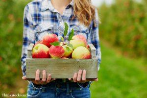 Freshly picked apples at the Hendersonville Apple Festival