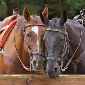 horseback riding near asheville