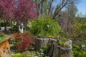 the spring time at The Orchard Inn