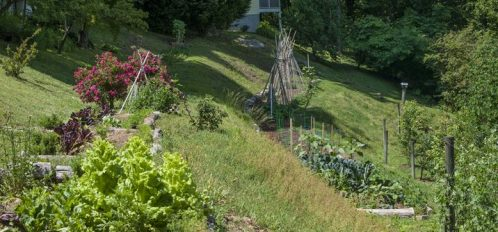 Our organic garden initiatives