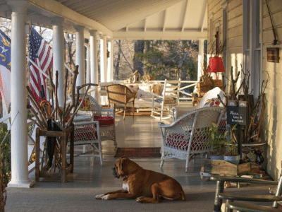 orchard inn boxer on the porch