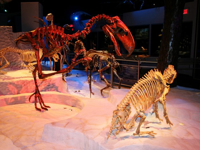 Paleontology Exhibit at Asheville Museum of Science